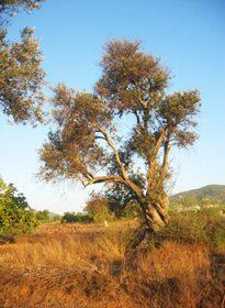 arbre_desert_cabinet_biezanek